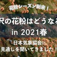 【金沢】花粉シーズン到来!「日本気象協会」に今年の見通しを聞いてきました!【2021年版】