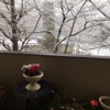 第156回「1月の大雪はたいへんでしたね。」(2018.1.31.)