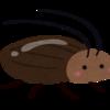 ゴキブリ嫌いな私が選ぶ、ゴキブリを見ないで済むアイテムはこれ!