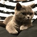 猫と子育て☆自分育てブログ