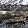 荒子川公園 2020.4.14