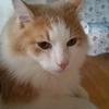 ノルウェージャンフォレストを飼ってみよう!猫を飼う心得と心構えとは