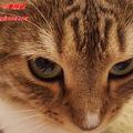 猫カフェで謎解き!モカラウンジ池袋東口店「MoCHAのフシギな石板」を紹介