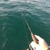 アジングロッドでティップランエギングはできるのか。そして、アオリイカは釣れるのか。検証編その3