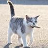 猫の黄色脂肪症(イエローファット)の症状、原因、治療法は?