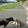 5月の風の犬を撫でに行こう【犬の思い出シリーズ】
