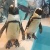 池袋のペンギンのいるBARに行って餌やりしてきたよ!