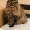 心肥大の愛猫が腎不全と診断された