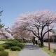 「金澤桜百景」蔵出し写真(その4)