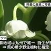 希少なスズランの花