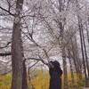 チャニョルさんと桜のInstagram