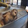 本日の備忘録/《人間にとって猿とは何か》