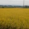 食欲の秋・おいしいお米を食べたい!