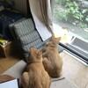 猫たちがトリを観察している