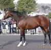 2021年新種牡馬:ディーマジェスティ