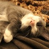 みんなの家猫の夜の寝場所はどこですか?猫の飼い主の意見