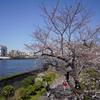 隅田公園に桜を撮りに行きました。