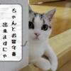 猫の短時間のお留守番 ~ケージ?放し飼い?~