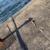 館山は布良港にて釣り