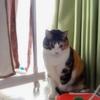 【愛猫日記】毎日アンヌさん#138