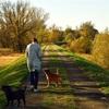 趣味を散歩にしよう!おすすめの理由4選!
