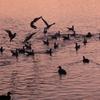 鳥と夕景 その6