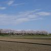 手取川「三本桜」(後編)