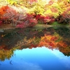 用作公園の紅葉と翡翠♪