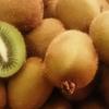自然栽培キウイフルーツ始まりました