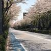 我が家なりの、桜を見る会
