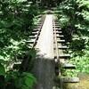 京都大学が運営する芦生森林鉄道を訪ねてみた(後編)