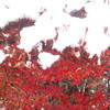 関東地方に54年ぶりの11月の初雪