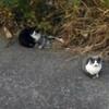 最初に2匹の猫を保護したのは、もう年の瀬でした ~ビアンカとネーロとグリジア(前編)~