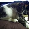 猫がPCモニターの前で寝る理由
