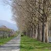 滋賀県マキノ「メタセコイア並木」