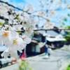 奈良吉野:吉野ぶらりまち歩き(1)