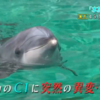 水族館ガール 4話あらすじと感想「生命(いのち)」