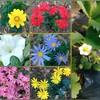 この1ヶ月で35コの植物を植える✨🤘(*˘ー˘*)