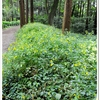 """《""""泉の森の植物""""❖2020/10/03❖》"""