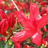 ポカポカ散歩道、紅色の花