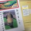 (財)日本蛇族学術研究所 通称・「ヘビ研」 ( *´艸`)