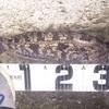 【アブラコの活性が高い】苫小牧東港でナイトロック。