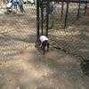 自転車から降りたくない犬ピッパ!