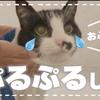 【久々のお風呂で気持ち良いけど長い一日に感じた おばあちゃん猫 #42】