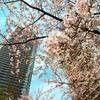 【日記】2018年3月26日(月)「桜」
