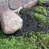 苔に囲まれているお石さん