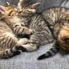 【地域猫】Vol.14-3 仔猫ちゃん2匹 新しいネコ生スタート♪