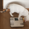 体重計で、++と表示されたが・・?