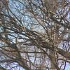 多摩川探鳥会は猛禽くんがいっぱい!