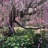浜松市に到来した春を、カメラ片手に愛でてきた